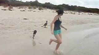 Кенгуру на пляже