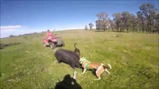 Nonton Pig chasing 2016 Film Subtitle Indonesia Streaming Movie Download
