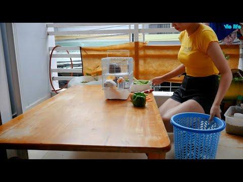 Vie Girl Chăm Sóc Chuột Lang Và Hamster