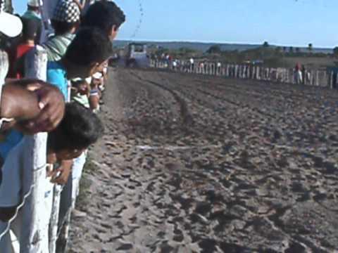 VAQUEJADA DE TOMAR DO GERU TATA MUNTANDO VAQUEIRO MOON FILHO DE BLACK MOON