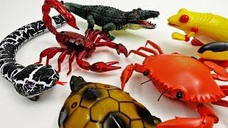 Video Super Creepy Toys Collection 2 R/C Snake Crab Scorpion Turtle Alligator Frog MP3, 3GP, MP4, WEBM, AVI, FLV Desember 2017