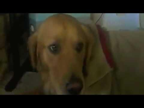 Anteprima Video Video di un cane che ha paura del temporale