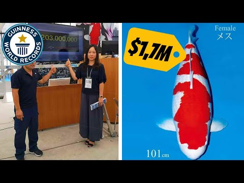 World Record! Most Expensive Koi Fish | $1.700.000,- USD