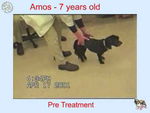 Dogs spinal cord injury