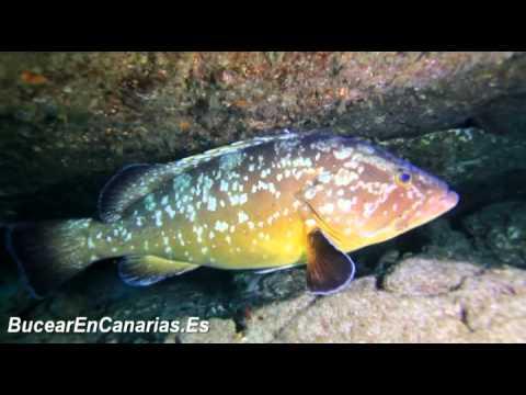 Inmersiones en La Graciosa - Lanzarote - LANDIVE.ES