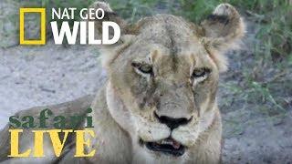 Safari Live - Day 113 | Nat Geo Wild by Nat Geo WILD