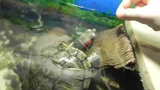 Как сделать плотик для черепахи