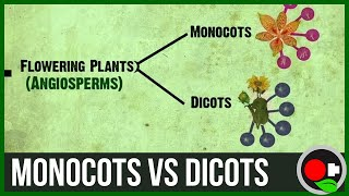 Plants - Monocots and Dicots