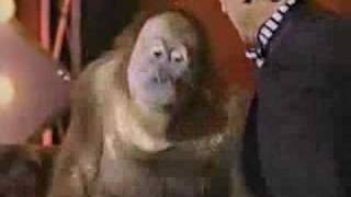 Who Doesn't Love Orangutans?