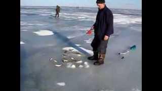 Зимняя рыбалка на окуня, Куршский залив