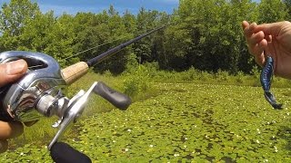 Video Punching Pads - Summer Pond Bassin in Bowie, MD MP3, 3GP, MP4, WEBM, AVI, FLV Januari 2019