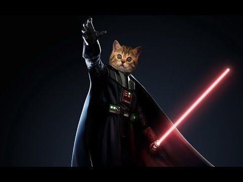Star Wars Cats - The Imperial March (Darth Vader's Theme)