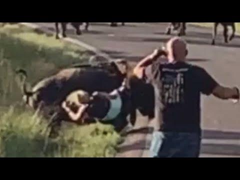 Buffalo Attacks Woman Motorcyclist at Custer State Park South Dakota