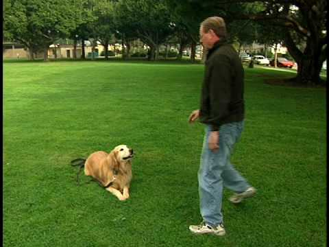 Koehler Method Of Dog Training Amazon