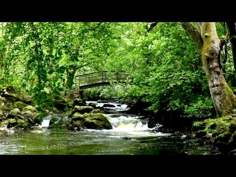 Musik - Relax by a Calming Tranquil Waterfall with Soothing Classical Music, Edvard Grieg's Piano Concerto in A Minor Op.16-II Adagio with Sounds of Nature, Bird Son...