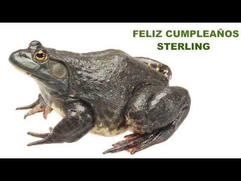 Sterling - ANIMALS & ANIMALES - A video happy birthday card with your name & a personalized birthday song from http://1HappyBirthday.com tiger, elephant, giraffes, gori...
