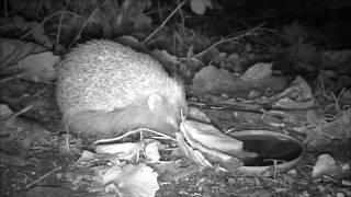 Wildlife Trail Camera - 17.11.2016