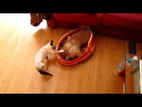 gattino-pestifero-tormenta-cagnolino
