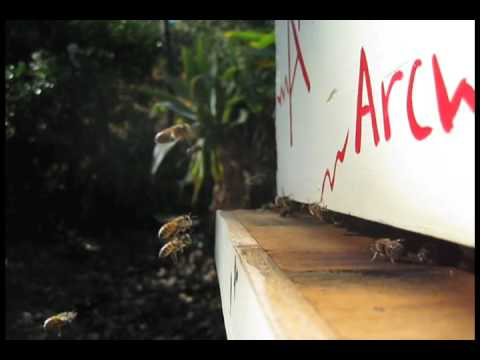 Backwards Beekeepers TV: Bee Housekeeping