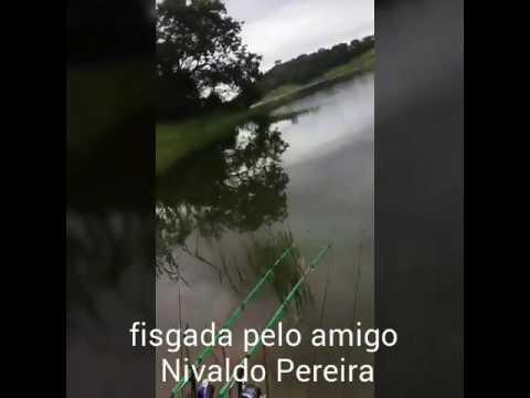 Piranha em Nazaré Paulista