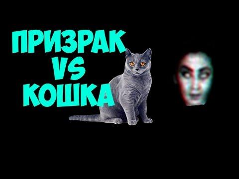Кошка vs призрак