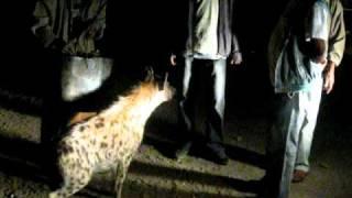 Ethiopian Ibex Support Trip 1