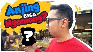 Video ANJING BISA NGOMONG DI JEPANG Wkwkwkwk MP3, 3GP, MP4, WEBM, AVI, FLV Juli 2018