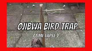 HOW TO MAKE AN OJIBWA BIRD TRAP . MORE INFO & VIDEOS : Bow making: https://www.youtube.com/watch?v=IyDaV... Survival traps: ...