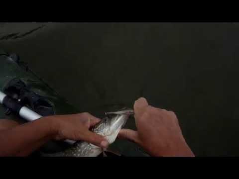 рыбалка на отводной с воблером видео