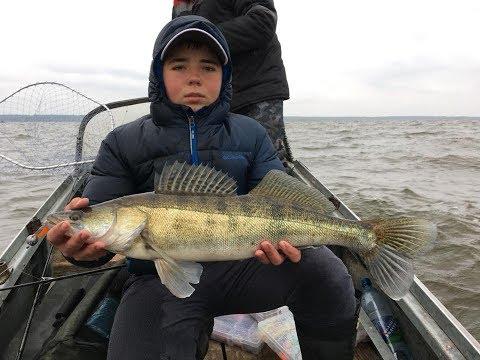 ловить судака в ноябре