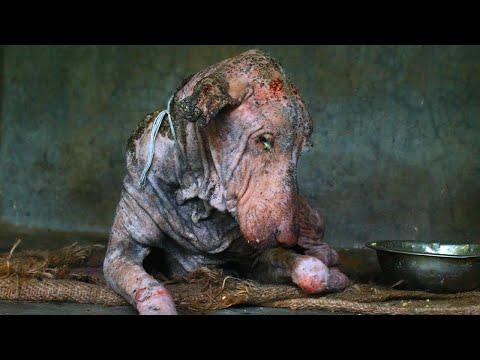Этот пес умирал… Но посмотрите, что случилось с ним через 2 месяца!