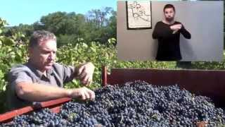 How does red wine? Explanations in sign language