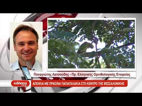 Αποικία με πράσινα παπαγαλάκια στο κέντρο της Θεσσαλονίκης | 26/06/2019 | ΕΡΤ