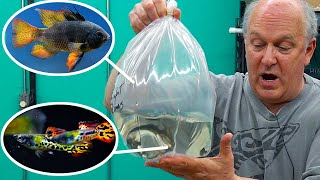 Master Breeder Brings New Fish We've NEVER Sold Before! [Unboxing] by Aquarium Co-Op