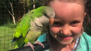 Download Video How My 6yr Old Tamed This Quaker Parrot (Without Me Knowing!) MP3 3GP MP4