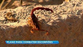 Prefeitura de Bauru apresenta plano de combate ao escorpião