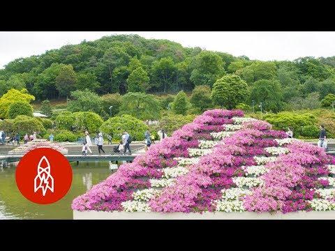 The Breathtaking Rainbow Garden of Japan