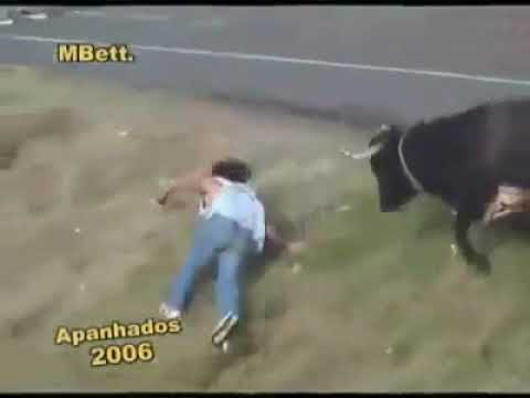 bull fight gone wrong