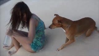 Video FUNNY VIDEO, ★★★★★, FUNNY DOG VIDEO, DOG STEALS A SHOE, FUNNY ANIMALS VIDEOS, CUTE DOG MP3, 3GP, MP4, WEBM, AVI, FLV Oktober 2018