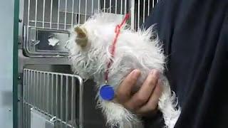 Dog Rescued from Death Row - Video by Eldad Hagar