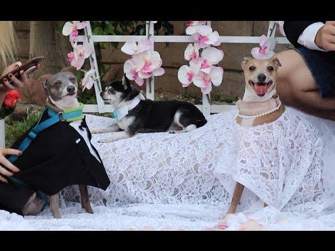 My Dogs' Wedding