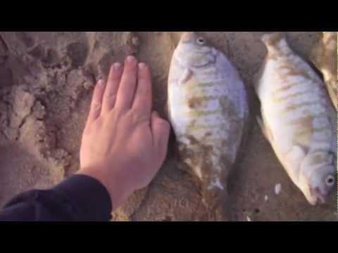 EPIC PERCH FISHING! Southern California Surf Fishing – April 2012