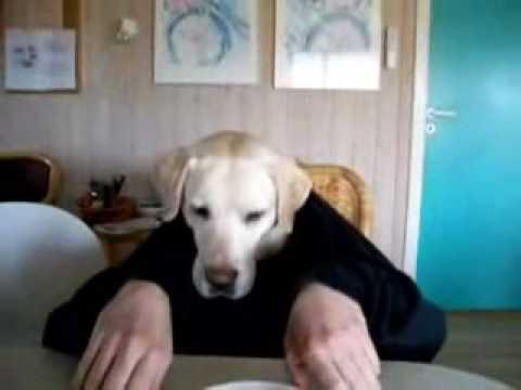 Perro comiendo con la mano