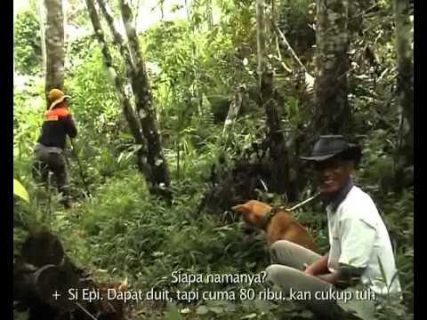 BABI VS ANJING (akumassa Padangpanjang | 2009 | 13' 34