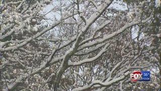 Massachusetts man hit by falling tree limb after storm dies