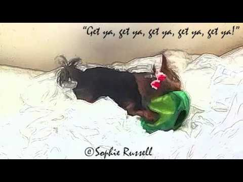 A Cute Funny And Energetic Yorkie Puppy Dog Playing With Stuffed Ladybug Toys!