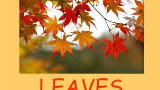 Autumn Vocabulary Lesson, Seasons Vocabulary, Basic ESL Lessons