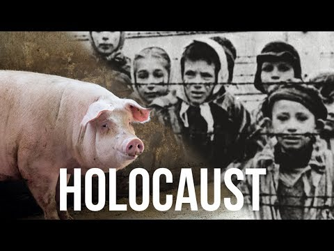 A HOLOCAUST SURVIVOR, Now VEGAN Activist - Is There A Line Between Animal And Human Suffering?