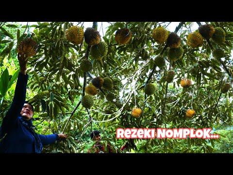 Panen Durian Ditengah Hutan || Bahagia Luar Biasa