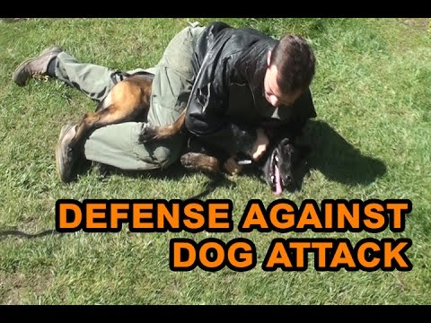 How to defend against a dog. Self defense against dog attack